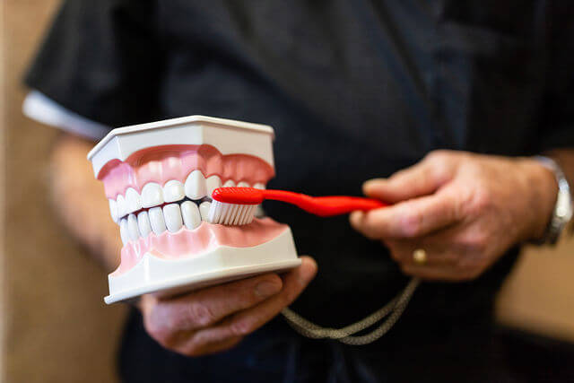 Dr. Gioia holding a model of a the upper and lower teeth, showing proper alignment of a toothbrush